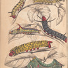 1.2.3. Caterpillar of A. Erythrinae; 4. Caterpillar of B. Motina; 5. Caterpillar of B. Nesia; 6. Caterpillar of B. Netrix