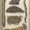 1. Serpula contortuplicata; 2. Tube of Terebella; 3. Teredo navalis, Shipworm; 4. Aphrodite, or Halithea aculeata, Sea-mouse; 5. Sabella; 6. Holothuria, Sea-cucumber