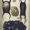 1. Egg of Skate; 2.  Eggs of Purpura; 3. Egg-cluster of Whelk; 4. Egg of Dog-fish; 5. Egg-cluster of Sepia, or Cuttle.