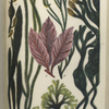 1. Fucus nodosus; 2. Zostera marina, Grasswrack, or Alva; 3. Delesseria sanguinea; 4. Furcellaria fastigiata; 5. Chondrus crispus, Irish, or Carrageen Moss; 6. Fucus vesiculosus, Bladder-wrack.