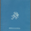 Callithamnion gracillimum [loose plate]