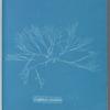 Griffithsia corallina