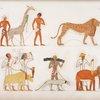 Varie specie di animali quadrupedi.