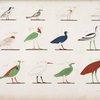 Varie specie d'uccelli rappresentati nelle cacce. La maggior parte sono distinti coi loro antichi nomi scritti in geroglifici.