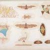 Altri uccelli, pipistrelli, farfalle ec. rappresentati nelle tombe.