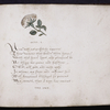 Closing of text -- final octonary, with flower decoration.