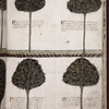 Four drawings of trees and explanatory texts.