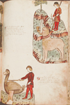 Images showing hunting of elephant and ostrich.