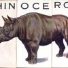 Rhinoceros.