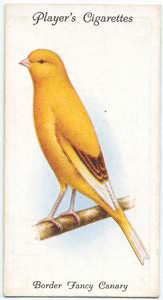 Border Fancy Canary. Digital ID: 462710. New York Public Library