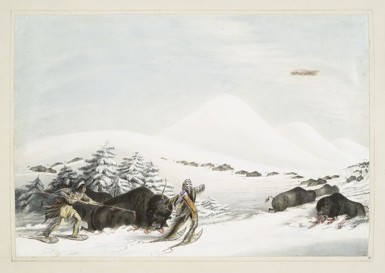 Buffalo hunt. On snow shoes.