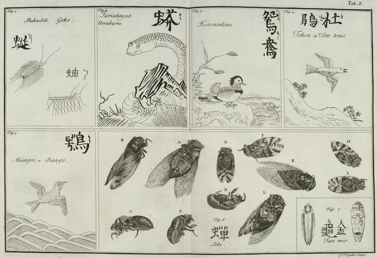 Insects, reptiles, and birds.