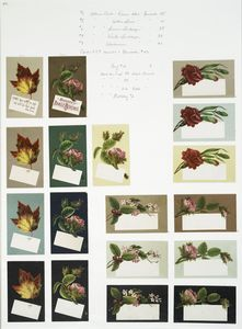 [Album cards depicting flowers and leaves.]