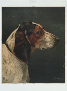 [A print with the word 'Hector' and depicting a portrait of a hunting dog.]