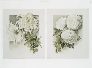 [The golden flower: prints depicting white flowers.]