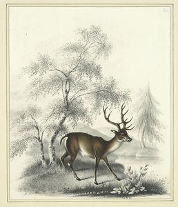 [A deer.]