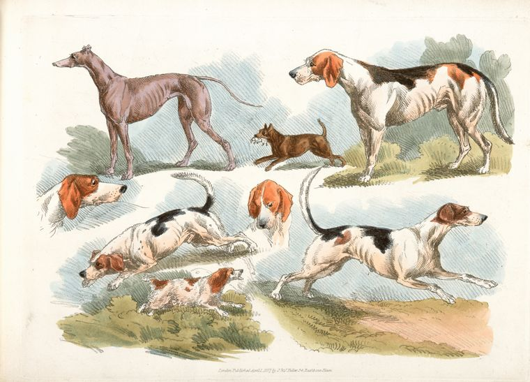 This is What Henry Thomas Alken and [Hunting dogs.] Looked Like  on 4/1/1817