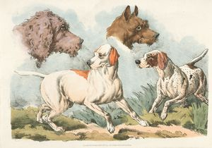 [Two dogs and two dog heads.]