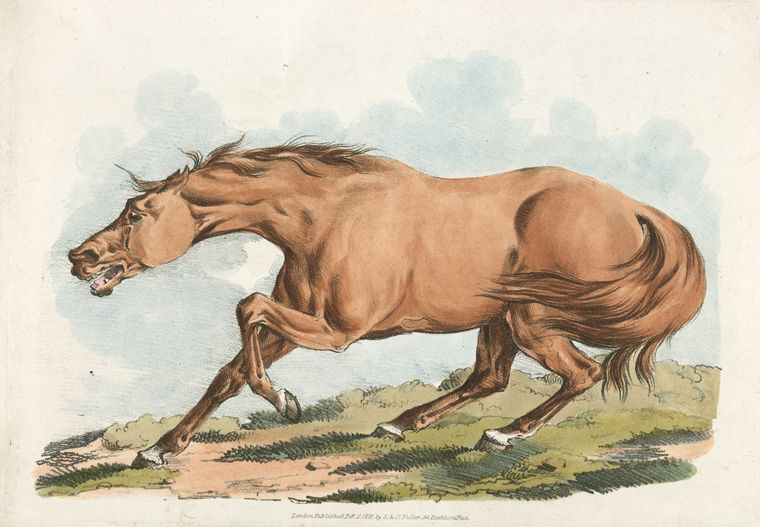 This is What Henry Thomas Alken and [Light-brown horse.] Looked Like  on 2/2/1818