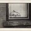 [Pumpkin decal on window]