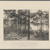 The  site of Thoreau's hut at Walden Pond