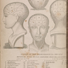 Names of the phrenological organs frontispiece