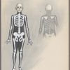 Skeletons - front & back