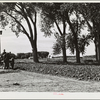 Plowing ground for a garden. Scottsbluff Farmsteads, FSA (Farm Security Administration) project. Scottsbluff, Nebraska