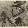 James Temple, strawberry picker, Hammond, Louisiana