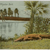 """Alligator Bait"" - postcard to Frederick Hoeing"