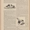 Auguste Rodin, Sculptor. - IX page 262