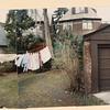 Backyard, Juno Street, Forest Hills