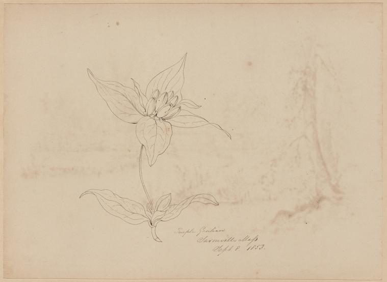 Fascinating Historical Picture of Thomas Kelah Wharton on 9/8/1853