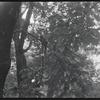 Trees. New York, NY