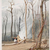 Spring. Burning fallen trees in a girdled clearing.  Western scene.