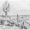 Tucson, Sonora