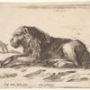 Un lion couché, tourné vers la gauche