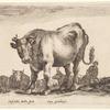 Un bœuf allant à gauche