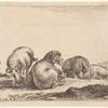 Des moutons et des béliers dans un pâturage