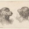 Deux têtes de chameau, placées en regard