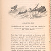 Description of the boats, with the various instruments, employed in the capture of the sperm whale page 154