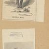 General Wool. Family portraits, No. 27. Maj. Gen. Wool / pubd. by J.C. McCrae 208 Broadway N.Y.