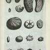 Conchæ Univalviæ: A. Lopas, seu Lepas, (Lampas) et Patella; B. Lopas, seu Lepas et Patella altera; C. Lopas, seu Patella tertia; D. Lopas, seu Patella quarta; E. Auris marinæ externa facies; F. Auris marinæ interna facies; G. Altera species Auris marinæ; H. Tertia species Auris marinæ; I. Quarta species Conchæ univalviæ; K. Verruca testudinaria; L. Operculum callorum; M. Alia species Operculi callorum; N. Tercia species Operculi callorum; O. Sexta species Conchæ univalviæ; P. Septimæ species Conchæ univalviæ extima facies; Q. Intima ejus facies; R. Octava species Conchæ univalviæ.