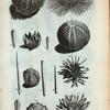 1. Echinometra Digitata Prima oblonga; 2. Est eadem digitata; D.D. Pennas, sive digitos in diversas species divisos repræsentant; 3. Echinometra Digitata secunda rotunda, vel Cidaris Mauri; 4. Est eadem cum digitis, quorum tres species visui sub Literis E.E.E. offeruntur; 5. Echinometra setosa, sive Echinus setosus; A.B.C. Echini Marini esculenti: A. Echinus, cujus os est apertum, ut omnia membra (quæ rarios sunt figuræ) intus accuratè possint conspici; B. Est Eschinus digitis orbus; C. Digitis ornatum se exhibet.