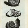 A. Nautilus Major, sive Crassus; B. Est Piscis huic Testæ inclusus; C. Est Cochlea, sive Testa, in longitudinem per medium dissecta.