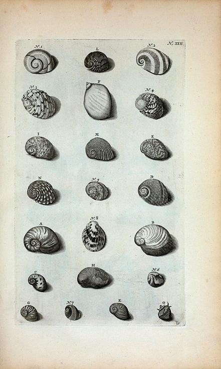 Cochleæ Valvatæ, sive Semilunares: A. Valvata lævis prima, sive Vitellus; B. Vitellus compressus; C. Valvata quarta; D. Valvata quinta; E. Valvata sexta; F. Valvata septima, sive albula; G. Valvata octava, sive tenuis; H. Valvata decima fluviatilis, sive Rubella; Fig. 1. et 2. sunt duæ species eximiæ pulchritudinis; Valvatæ Stritæ sunt secunda Species Cochlearum: I. Valvata striata prima, sive Alpina; K. Valvata secunda, sive fasciata; L. Valvata tertia undulata; M. Valvata granulata; N. Valvata sulcata nigra; O. Valvata spinosa; Fig.3. Valvata semilunaris vera; Fig. 4. Valvatæ semilunaris veræ secunda species; Fig. 5. Valvatæ semilunaris veræ tertia species; Fig. 6. Quarta species ut supra; Fig. 7. Quinta species ut ante; Fig. 8. (Belg.) Opregte Wijd-mond.