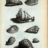 Cassides Tuberosæ: A. Cassis Tuberosa prima, sive Cornuta; B. Cassis Rubra; C. Cassis Pennata; D. Cassis Aspera;  Fig. 1-4 sunt diversæ Cassidum species.