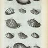 Cassides Læves Cinereæ: A. Cassis Cinerea lævis vulgaris; B. Areola; C. Cassis Cinerea lævis tertia; D. Fimbriata striata; E. Fimbriata lævis;  FIg. 1. (Belg.) Een zoort van de gevlakte Bezoar-hoorn; Fig. 2 (Belg.) Gestreepte  Bezoar-hoorn; Fig. 3. (Belg.)  Wilde Bezoar-hoorn; Fig. 4. (Belg.) Dwars gestreepte Bezoar-hoorn; Fig. 5. Species Cassidis cineræ lævis tertiæ, sed profundius sulcata; Fig. 6-9. sunt species simbriatæ Cassidis.