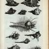Murices Ramosi: A. Murex Ramosus; B. Murex Saxatilis; C. Murex Minor; D. Murex Minimus; E. Murex; F. Haustellum; G. Tribulus; Fig. 1. Species Muricis Ramosi; Fig. 2. Species Muricis Minoris; Fig. 3. Species Tribuli; Fig. 4. Species Haustelli; Fig. 5. Species Haustelli altera.