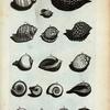 Cochleæ Globosæ: A. Cochlea striata, sive olearia.; B. Cochlea striata altera; C. Cochlea pennata; D. Cochlea pennata altera; E. Cochlea patula; F. Rapa; G. Bulla; H. Bulla; I. Cochlea Imbrium; K. Ficus; L. Umbilicata; M. Arcularia Major; N. Arcularia Minor; O. Serpentulus; P. COchlea terrestris; Q. Coclea lutaria; R. Alia species Cochleæ terrestris.